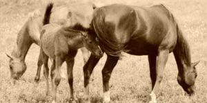Lisäravinteet hevosille