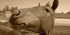 Vitamiinit hevosille